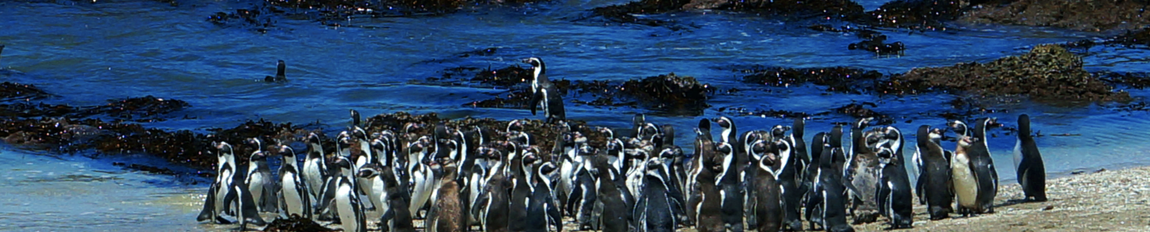 penguins peru