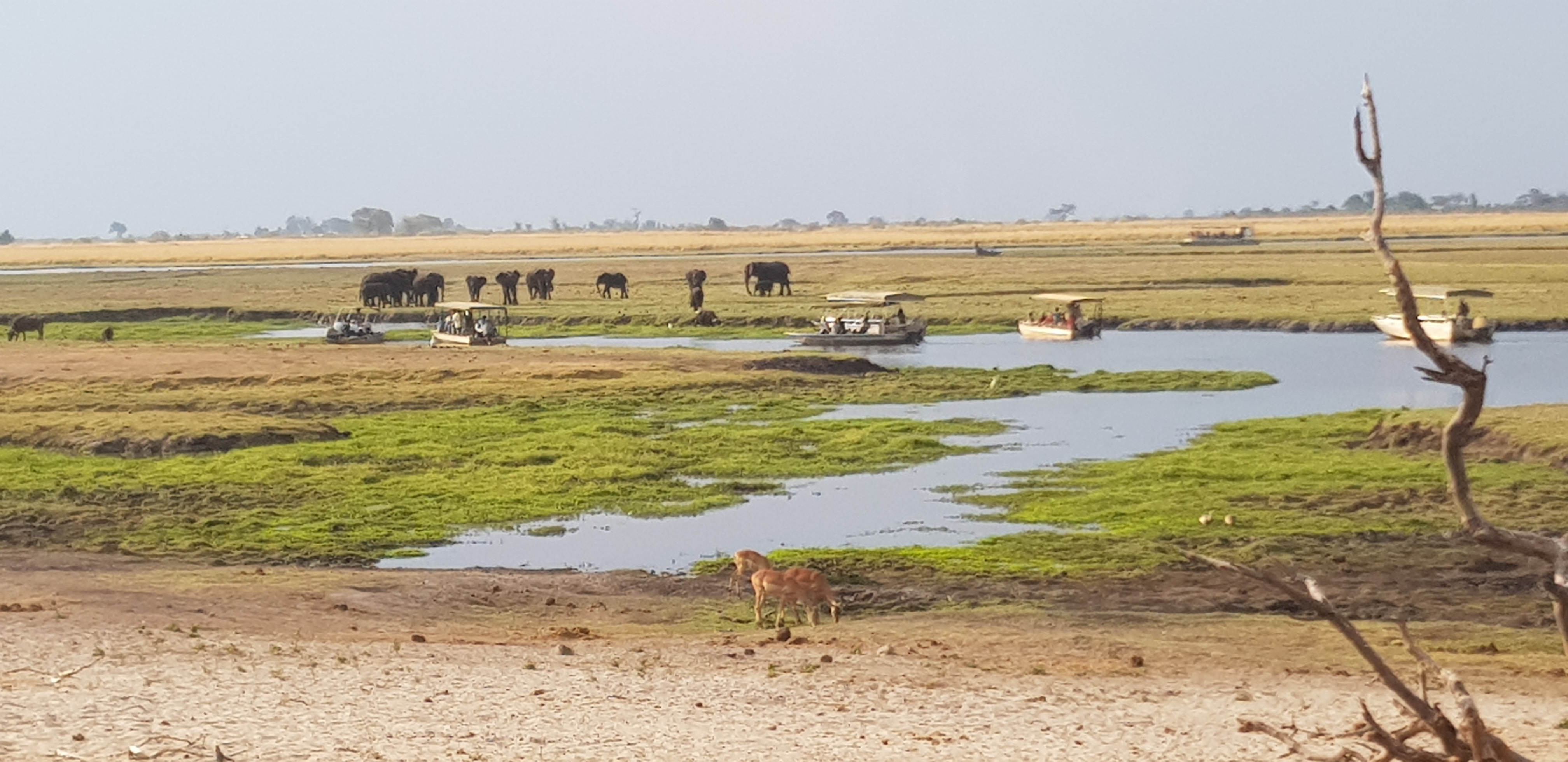 drying Chobe river front