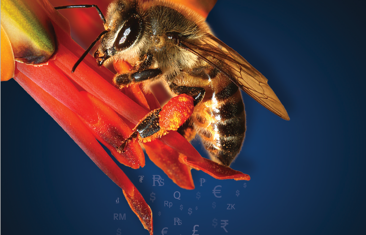 bee workbook
